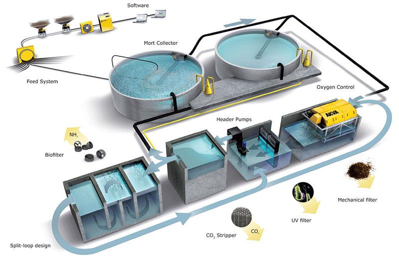 Узв для выращивания рыбы схема оборудования своими 478